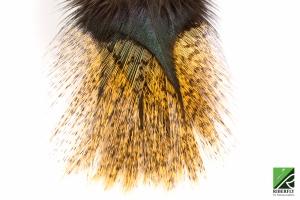 RIBGDL03 - Pardo flor de escoba